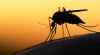 WHO Targets Malaria Eradication By 2025